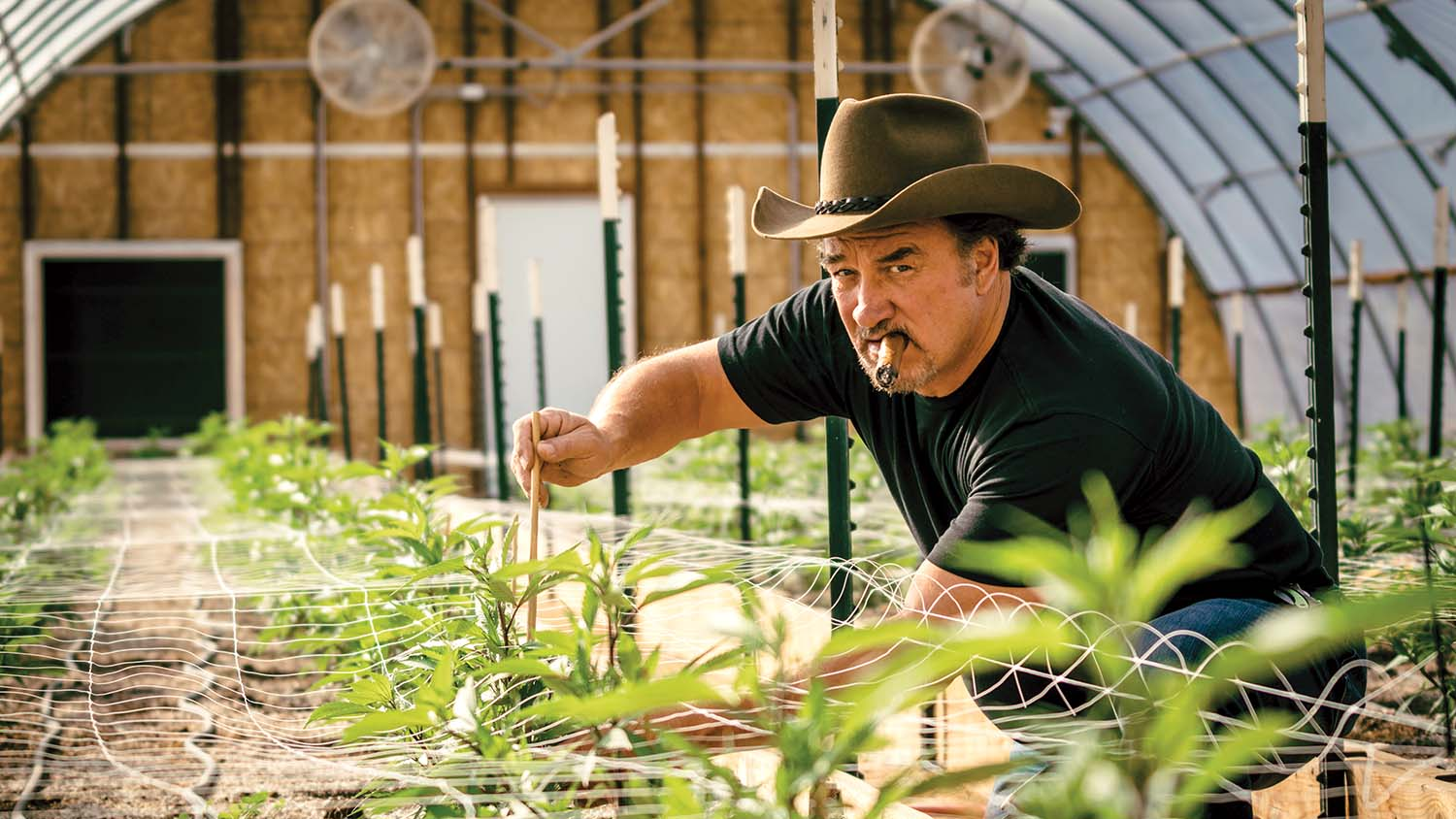 Naked girls in a pot farm Why Jim Belushi Left Hollywood To Launch A Pot Farm The Hollywood Reporter